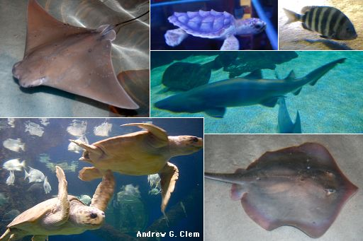 Virginia Beach Aquarium montage