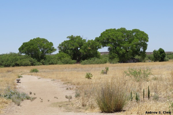 San Pedro River dry grass, trees
