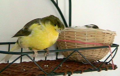 George & Princess at new nest