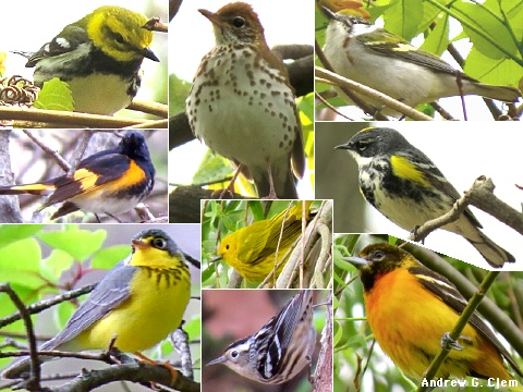 Bird Montage 5 May 2014