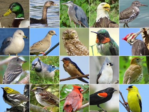 Montage Bird groups
