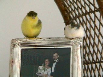 Princess & George on wedding photo 2005