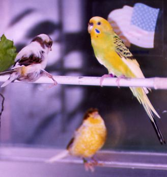 Princess, George, & Tweety