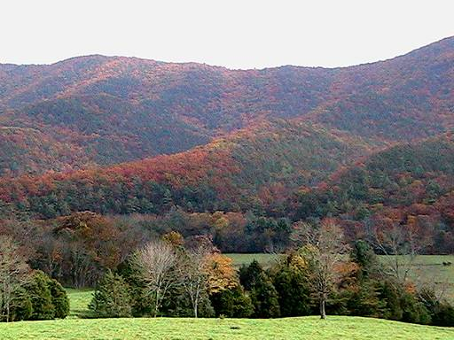 Calfpasture Valley fall foliage